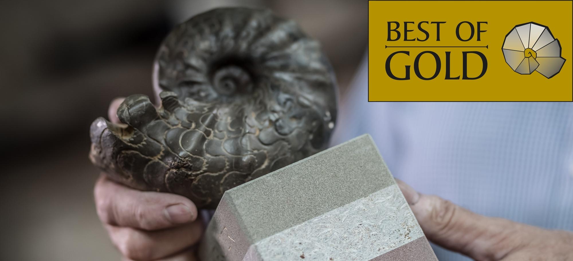 Best of Gold: Das Genießerpaket mit den besten Weinen Frankens kaufen